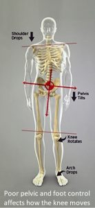 Hip & foot affect on the knee